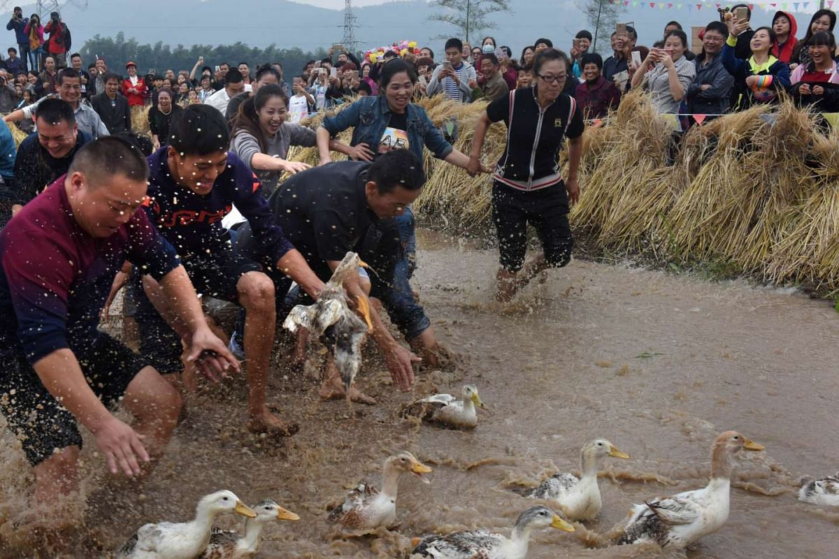 People catch ducks during a local game in Wuyi, Zhejiang Province, China, on Oct 30, 2016.