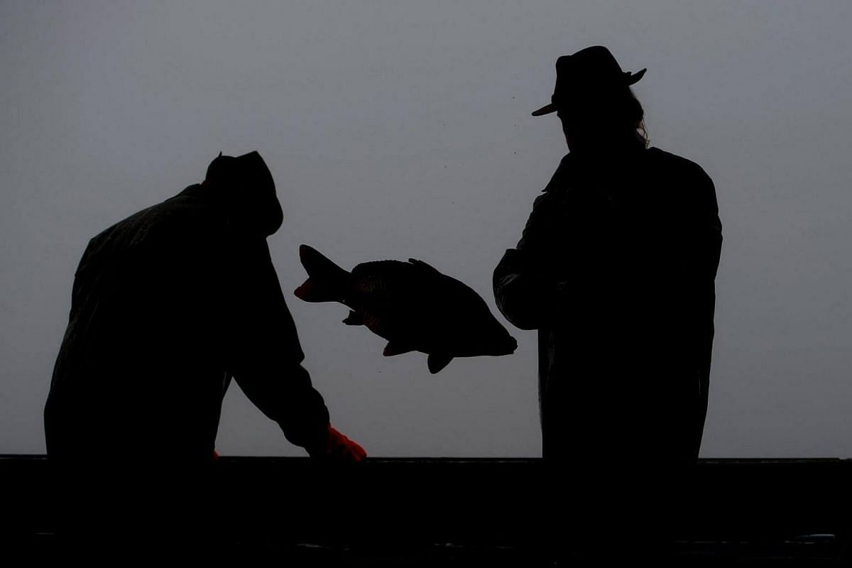 Czech fishermen sort fish during the traditional Carp haul at Lake Zablatsky near Zablati village, Czech Republic, on Oct 31, 2016.