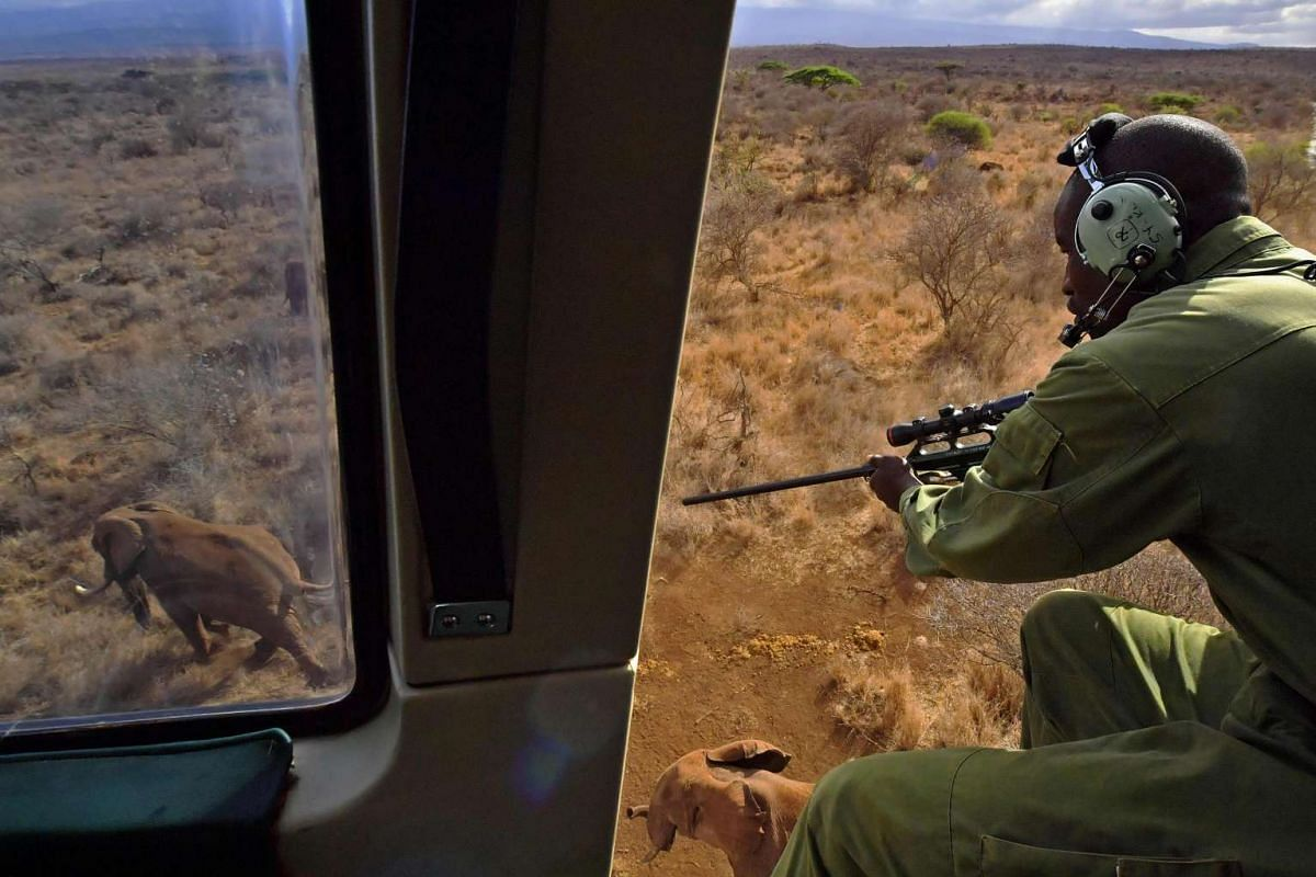 A vet shoots an elephant with a tranquiliser gun from a helicopter outside Amboseli National Park on Nov 2, 2016.
