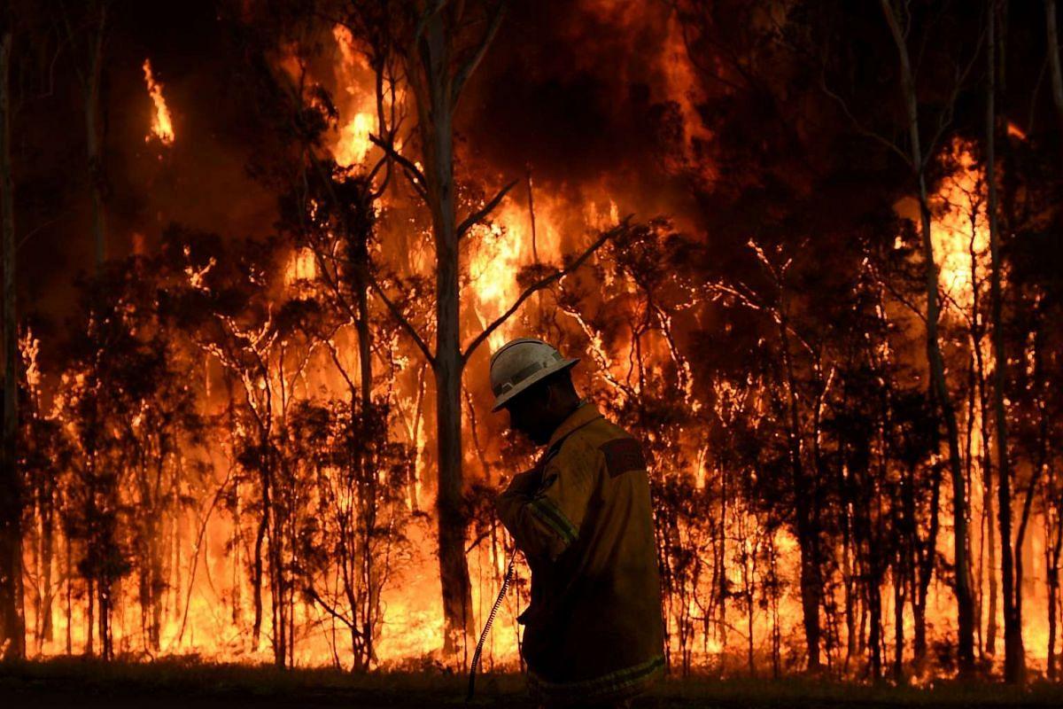 Rural Fire Service firefighters battle a bushfire in Medowie near Port Stephens, Australia on Nov 7, 2016.