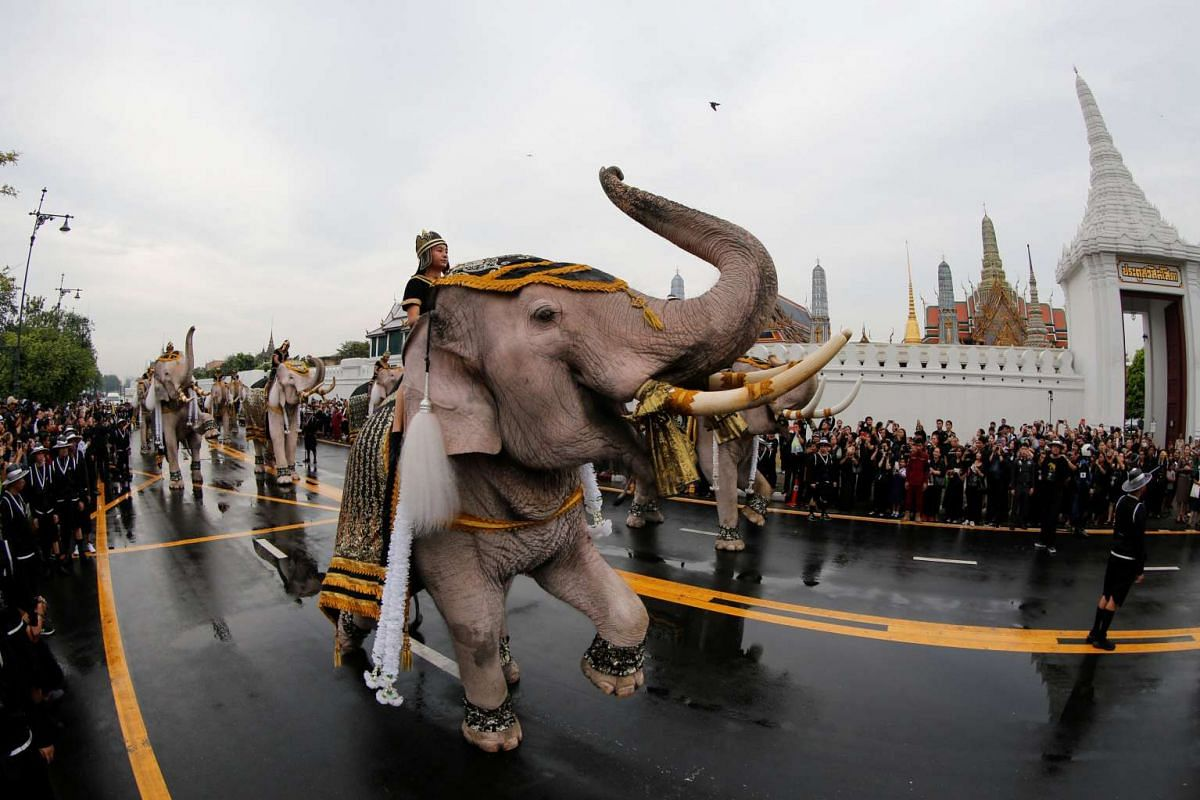 Ayuthaya elephants and mahouts paying their respects at the Royal Palace, where Thailand's late king Bhumibol Adulyadej is lying in state, in Bangkok on Nov 8, 2016.