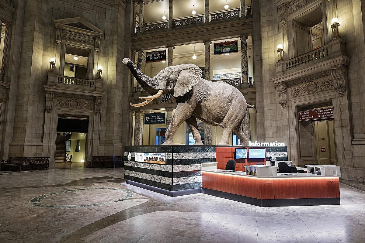 An African bull elephant greets visitors in the rotunda of the National Museum of Natural History. The National Air and Space Museum has hands-on activities for children such as robotic coding. The National Mall in Washington, DC is an expansive lawn