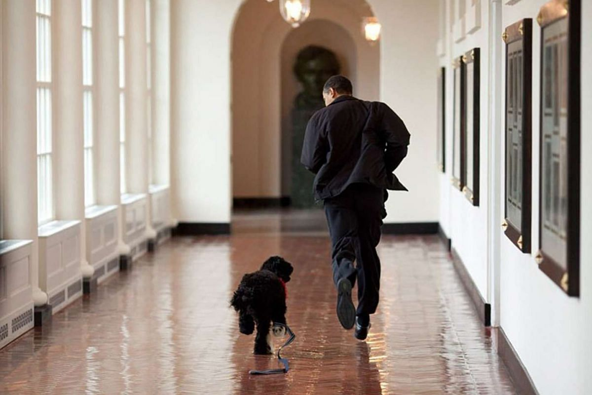President Barack Obama runs down the East Colonnade with family dog, Bo, on the dog's initial visit to the White House on March 15, 2009.