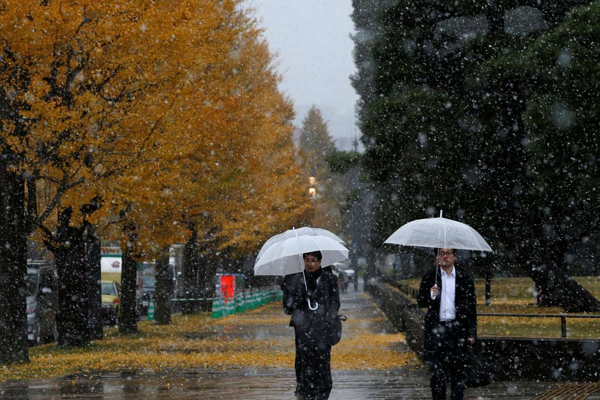 Men are seen near ginkgo trees during the first November snowfall in 54 years at a park in Tokyo, on Nov 24, 2016.