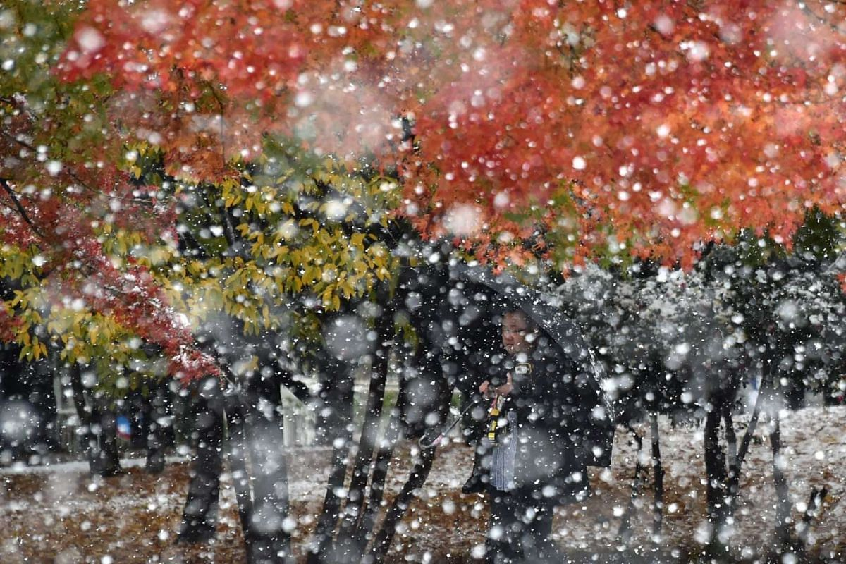 A photographer takes a picture in snowfall in Tokyo on Nov 24, 2016.