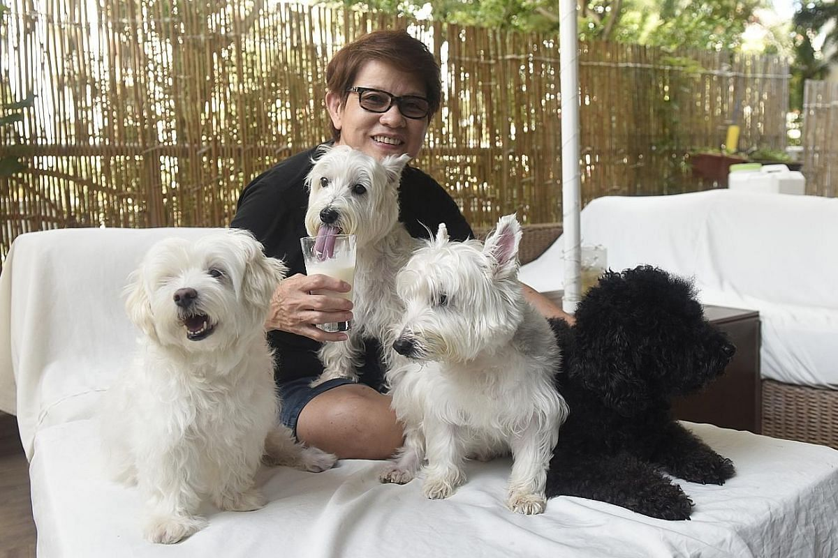 Ms Kristal Lynn Chang (far left, with her 16-month-old son Zachary Tham) no longer buys yogurt and kimchi for her family, as she can make these herself. Ms Lois Liu (above), whose dogs used to suffer from problems such as skin rashes, bald patches, b