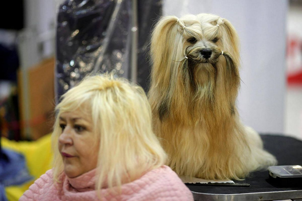 """A woman sits next to a dog during the fifth edition of the """"Mi Mascota"""" (My Pet) fair in Malaga, southern Spain, on Nov 27, 2016."""