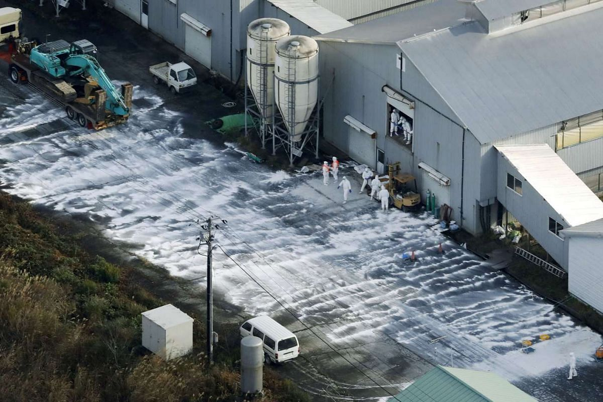 Workers wearing protective suits cull chickens after birds were found dead at a poultry farm in Sekikawa town, Niigata prefecture, Japan, on Nov 29, 2016.