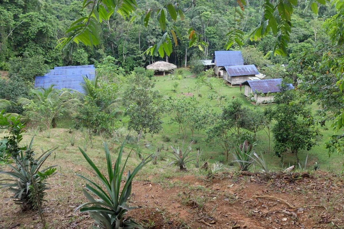 A remote finca, or farmstead, in the wild, mountainous rainforest that spans the isolated isthmus between Colombia and Panama.