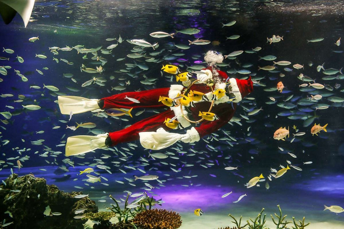 A diver wearing costumes of Santa Claus feeds fishes and rays at Sunshine Aquarium during a special seasoning feeding show in Tokyo, Japan, December 22, 2016. PHOTO: EPA