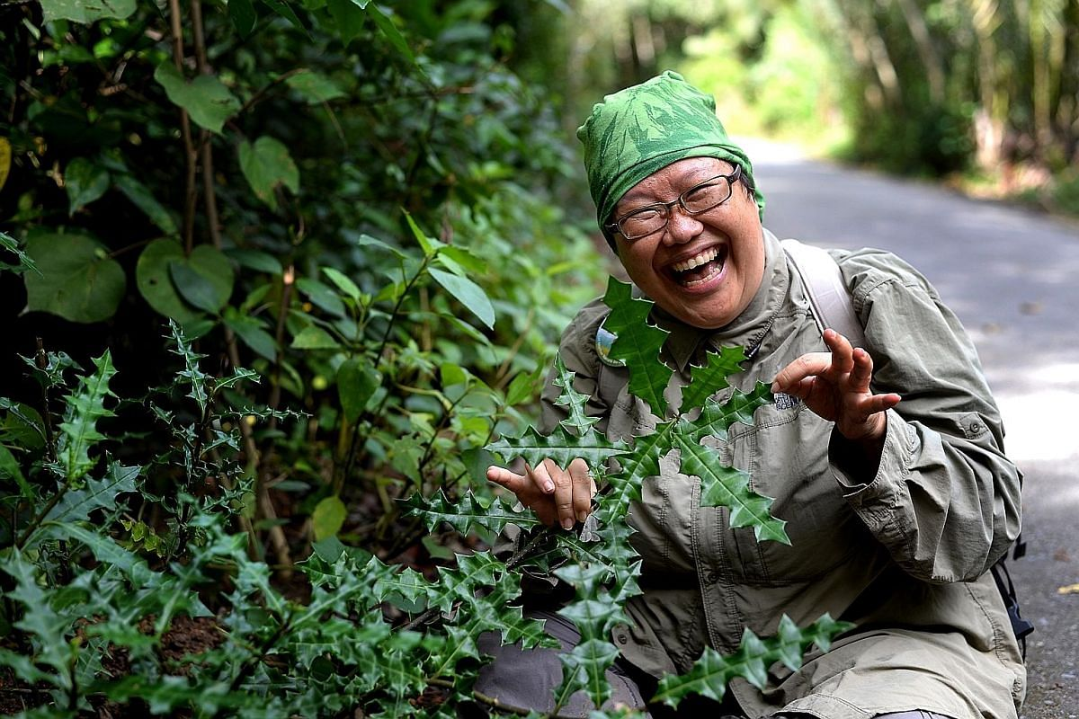 Naturalist Ria Tan, with sea hollies on Pulau Ubin, leads free walks on the island that aim to raise awareness about its mangrove assets.