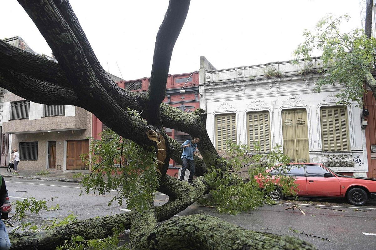 A severe thunderstorm with winds of more than 100 km an hour wreaked havoc in Montevideo on Jan 3, 2017.