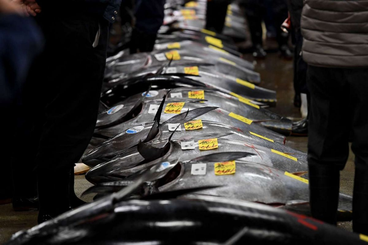 Fishmongers checking bluefin tuna prior to the new year's first auction at the Tsukiji fish market in Tokyo, on Jan 5, 2017.