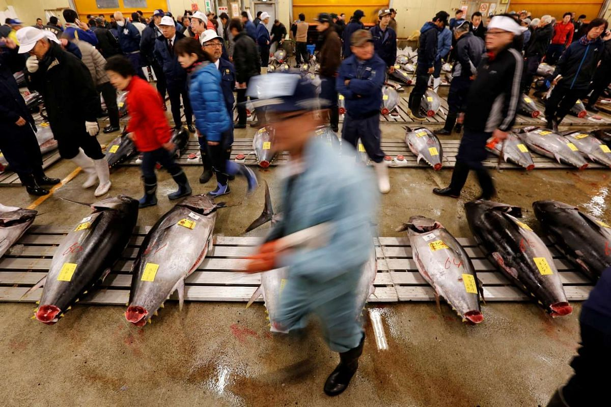 Wholesalers checking the quality of fresh tuna displayed at the Tsukiji fish market before the New Year's auction in Tokyo, on Jan 5, 2017.