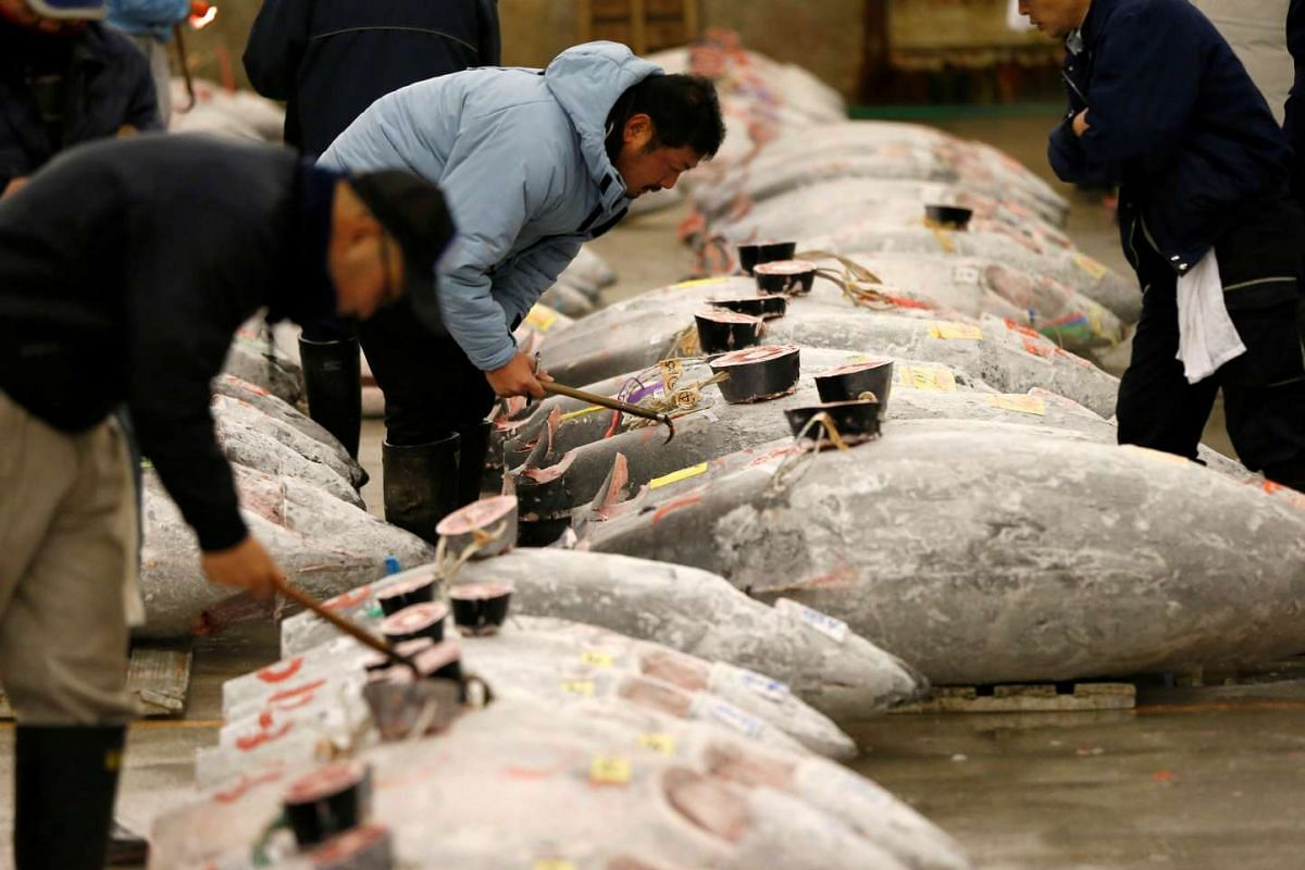 Wholesalers checking the quality of frozen tuna displayed at the Tsukiji fish market before the New Year's auction in Tokyo, on Jan 5, 2017.