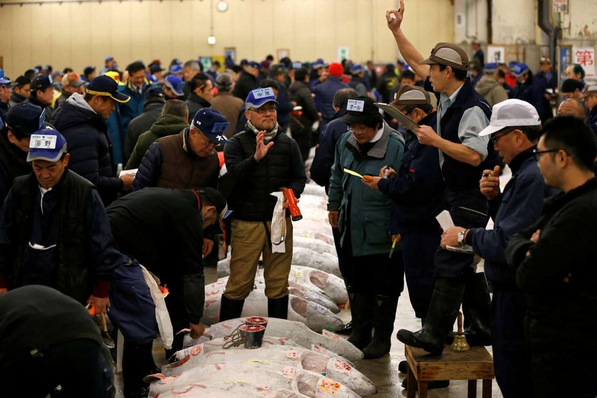 An auctioneer (right) raising his hand as he starts the New Year's auction of the frozen tuna while wholesalers check the quality of frozen tuna displayed at the Tsukiji fish market in Tokyo, on Jan 5, 2017.