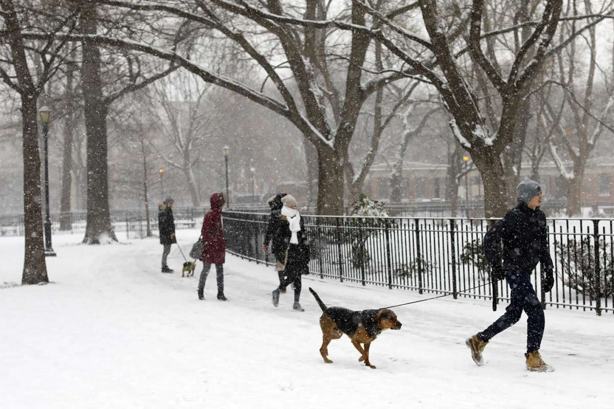 People and their dogs braving the snowy conditions for a walk at Tompkins Square Park in New York.