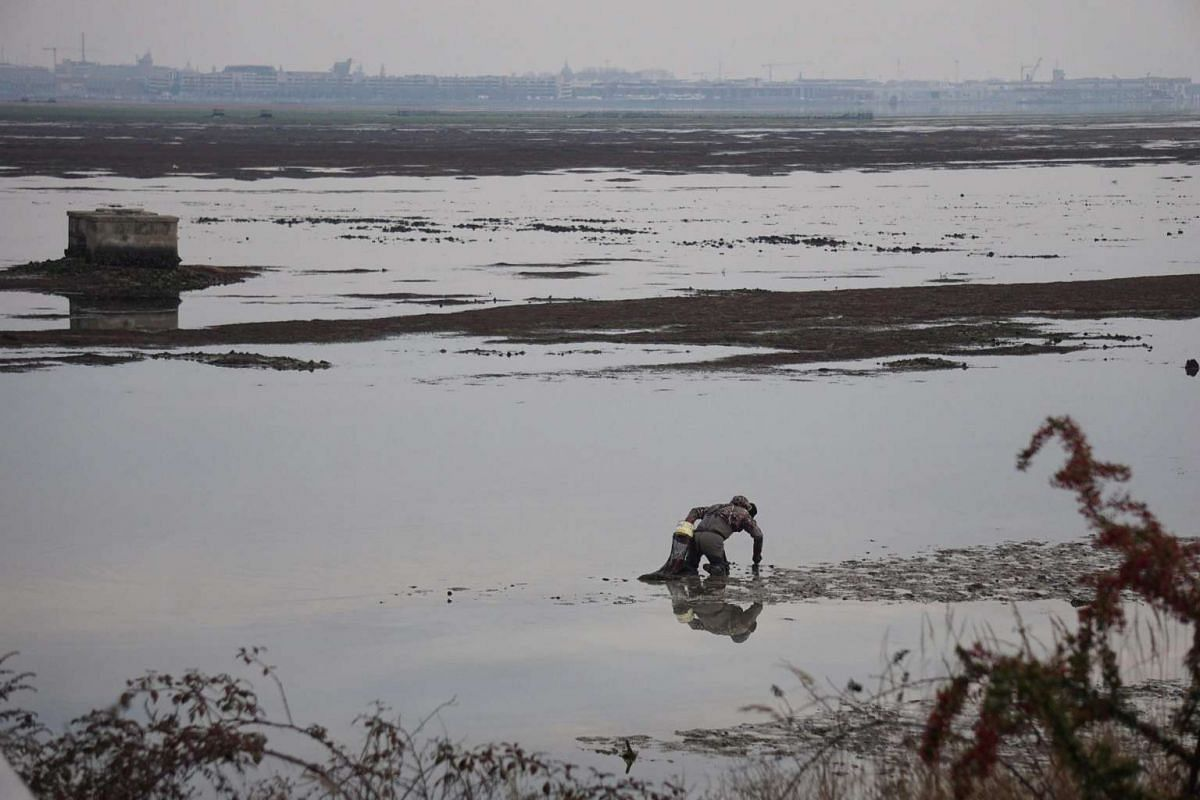 Clam seekers work on iced mire at San Giuliano point, in the north lagoon of Venice, where the water is lower, Venice, Italy, January 9, 2017. PHOTO: EPA