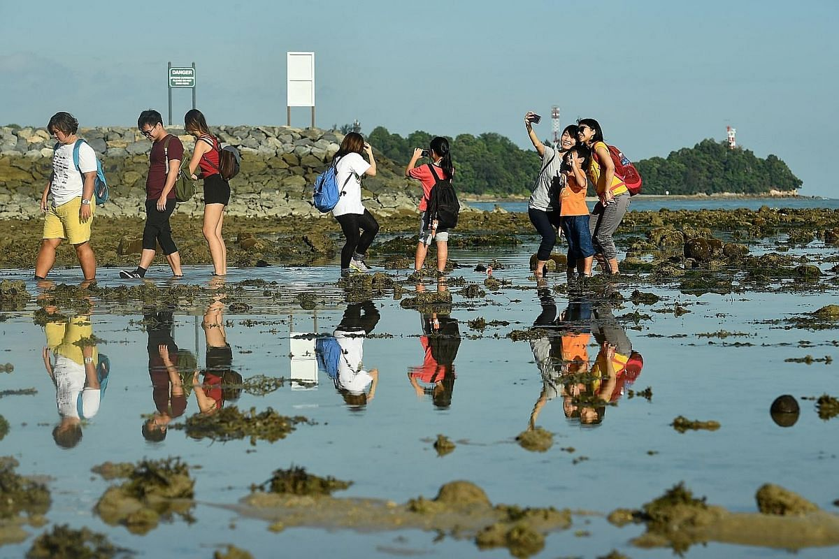 NParks conducts intertidal guided walks for the public at Sisters' Islands Marine Park twice a month. Sealife seen along Sisters' Island dive trail are (clockwise, from far left, top) polyps; clown fish; feather stars; sea stars; and nudibranches.