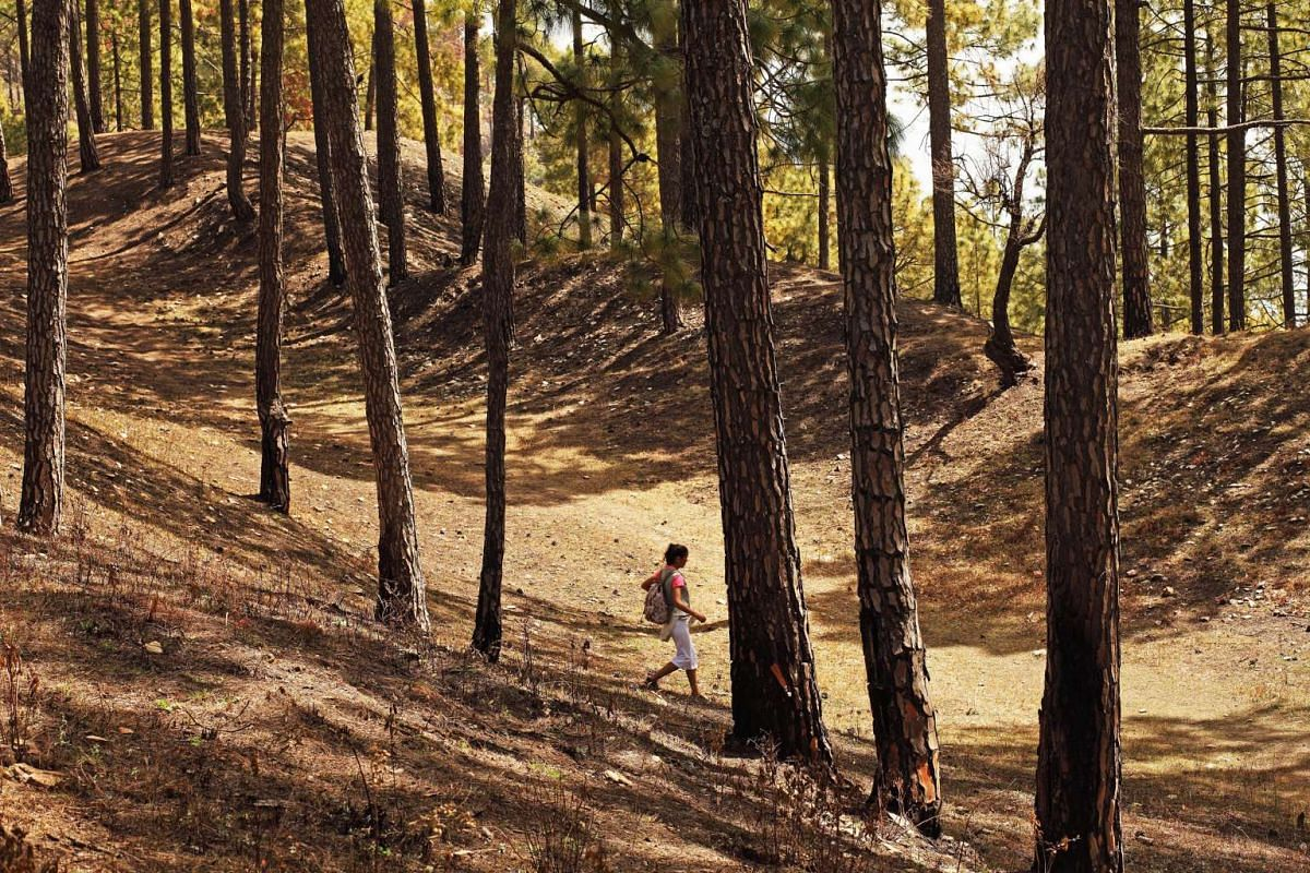 Go on forest walks at Ananda, an award-winning destination spa resort in the Himalayan foothills of India.
