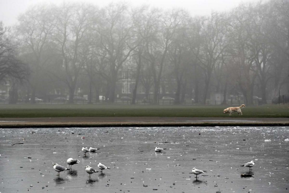 Seagulls standing on a frozen pond on Clapham Common.
