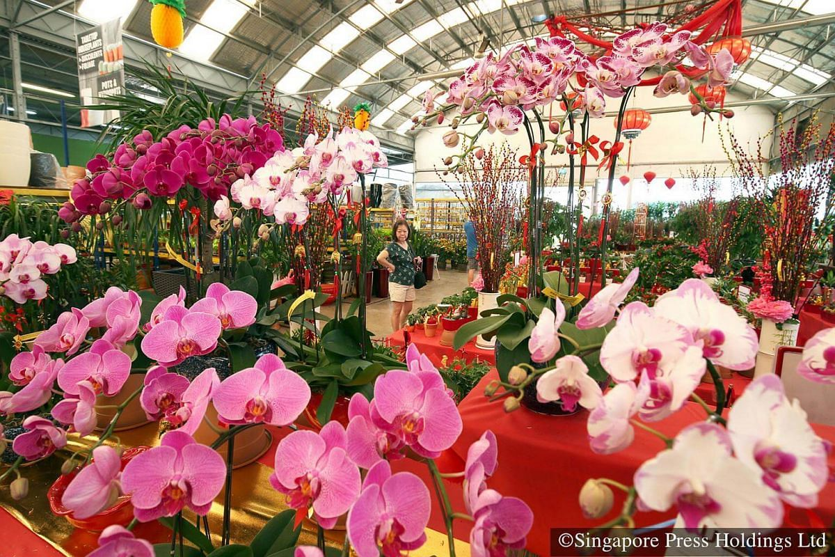 2017: Festive flowers on sale. Plants such as 蝴蝶兰 (Phalaenopsis hybrid) and Kumquat are popular among the customers.