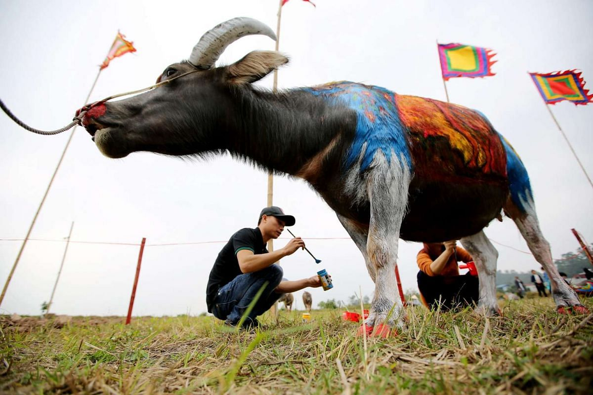 Two artists painting a buffalo during the Tich Dien festival in Ha Nam province, Vietnam, on Feb 2, 2017.