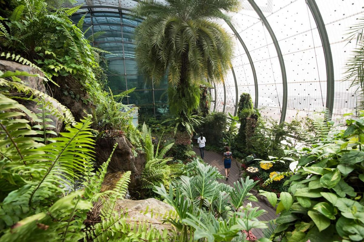 The world's first butterfly garden in Changi Airport