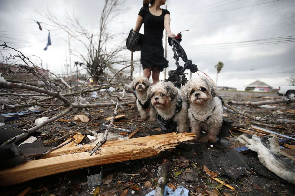 A woman holds three dogs by a make shift leash amongst the debris left behind by a tornado in New Orleans, Louisiana, on Feb 7, 2017.