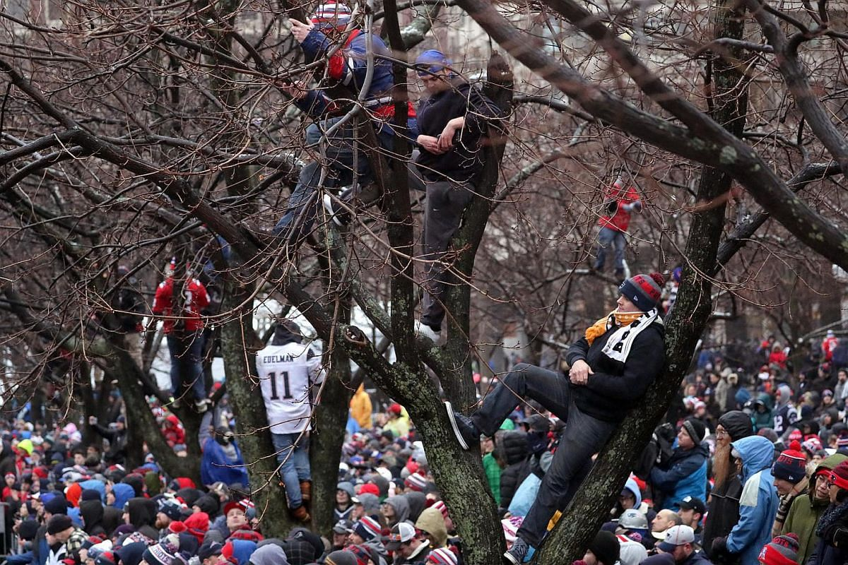 New England Patriots fans seek advantageous viewing positions for today's rally at City Hall Plaza during Super Bowl LI victory parade in Boston, Massachusetts, US, on Feb 7, 2017.
