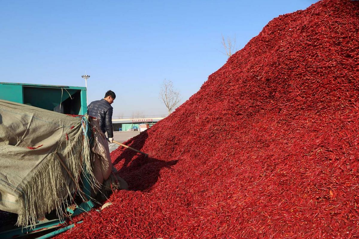 A worker works near a pile of chillies at a market in Jinxiang, Shandong province, China on Jan 19, 2017.