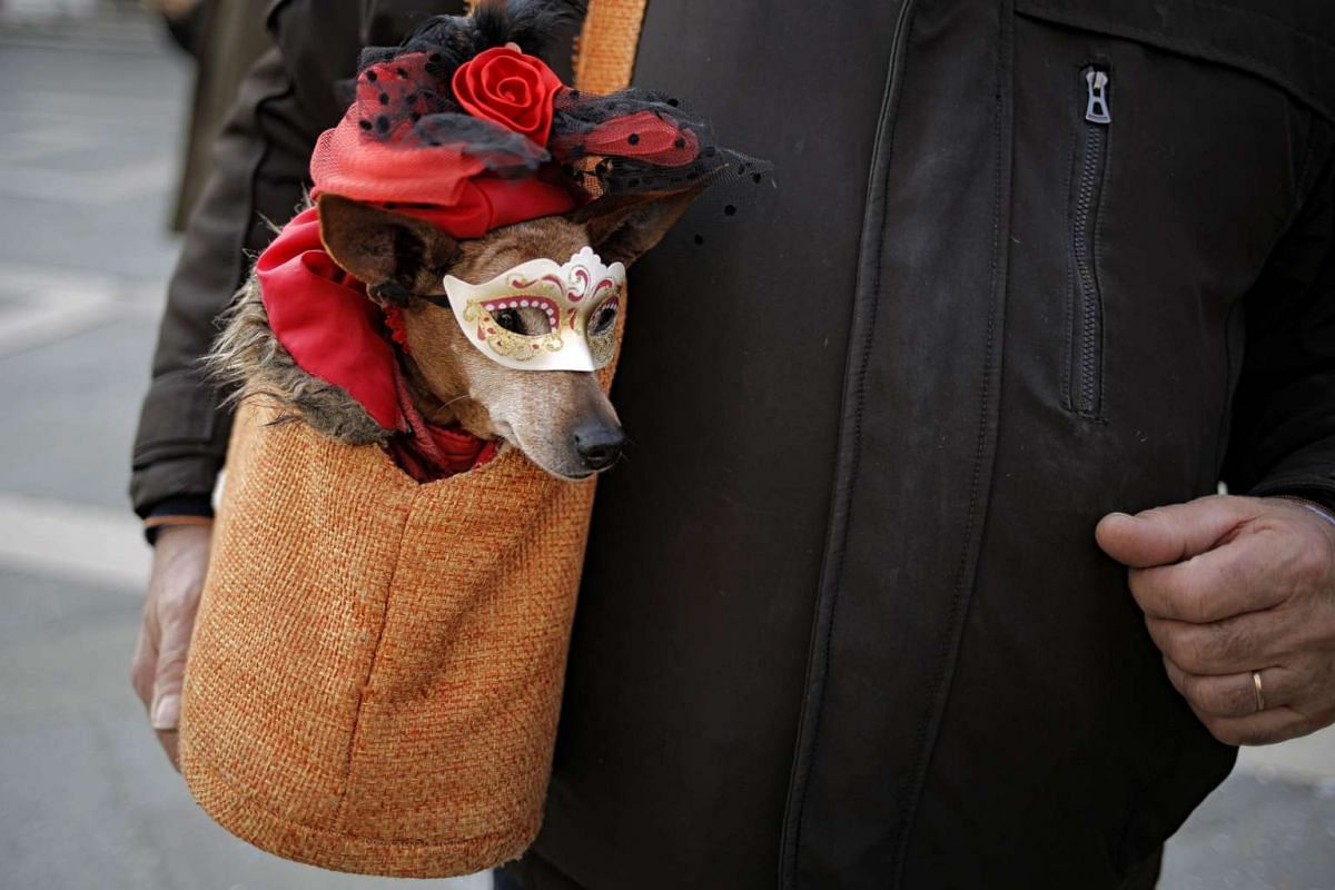 A dog dressed in masks sits in a bag during the Venice Carnival on February 12, 2017 in Venice. PHOTO: AFP