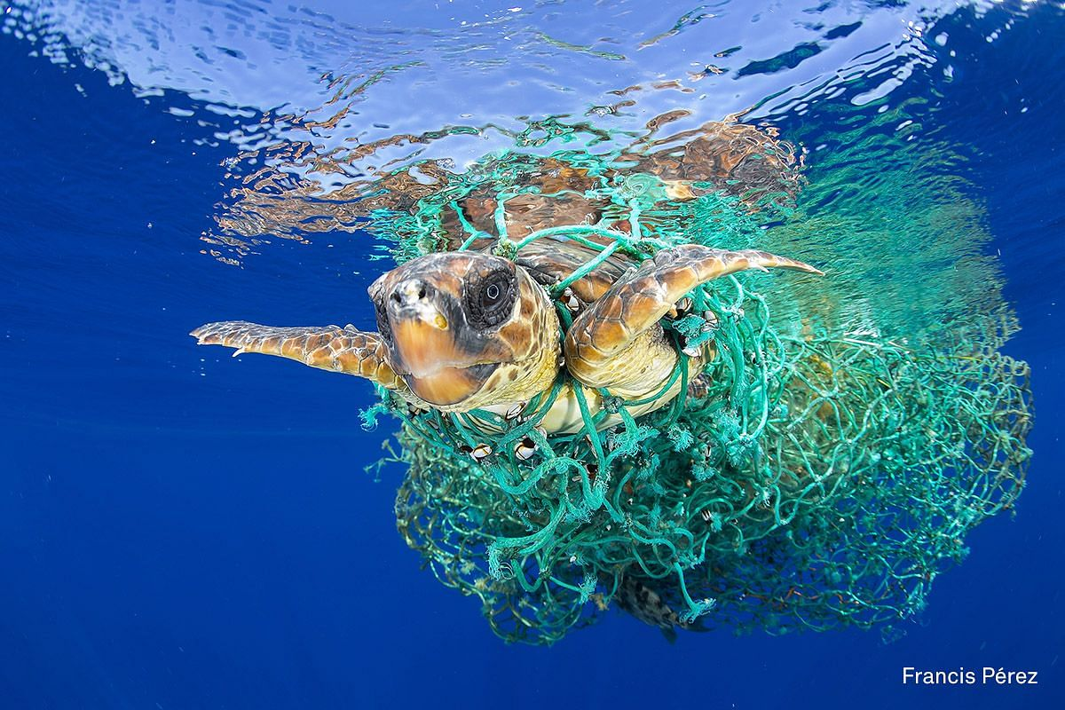 First Prize Nature (Stories) category. A sea turtle entangled in a fishing net swims off the coast of Tenerife, Canary Islands, Spain, on June 8, 2016.