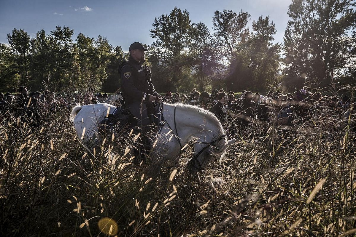 A Slovenian police officer on horseback escorts refugees after they crossed from Croatia.