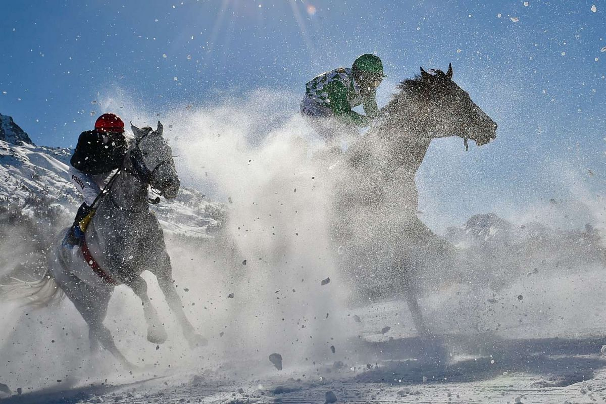 Competitors taking part in the 1,600m flat race at the White Turf horse racing event in St Moritz, on Feb 19, 2017.