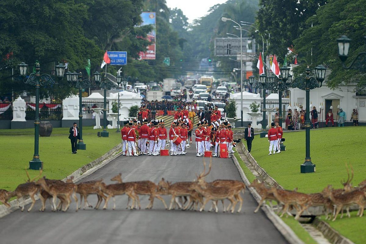 Indonesia's honour guard waiting for the arrival of Saudi Arabia's King Salman Abdul Aziz at the presidential palace in Bogor, south of Jakarta, on March 1, 2017.
