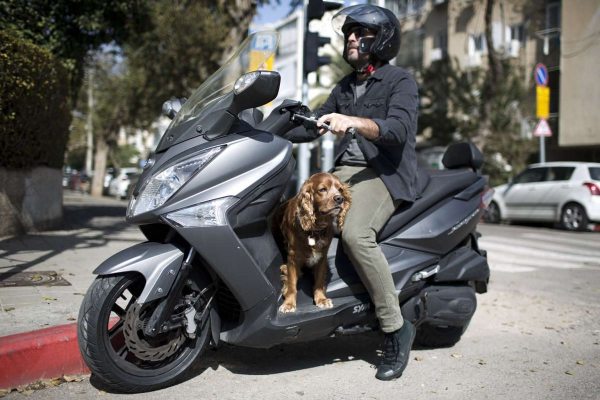 A man riding a scooter with his dog in Tel Aviv, Israel, on Feb 24, 2017.