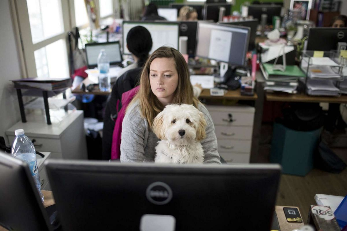 A high-tech company worker sitting with her dog in an office in Tel Aviv, Israel, on Feb 26, 2017.