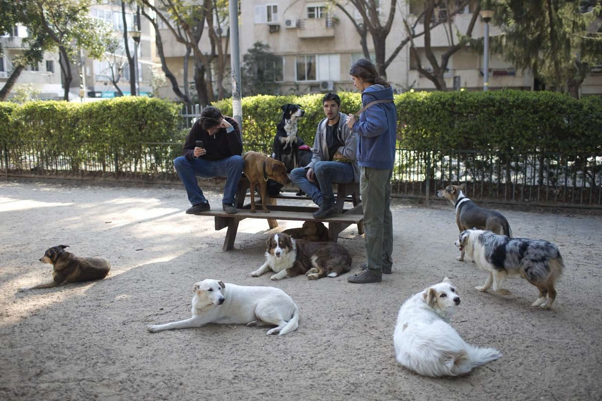 People and their dogs sitting on a bench in a special dogs garden in Meir Park in Tel Aviv, Israel, on Feb 21, 2017.