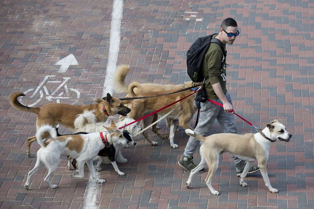 A dog walker strolling with dogs in Hayarkon Park in Tel Aviv, Israel, on Feb 21, 2017.