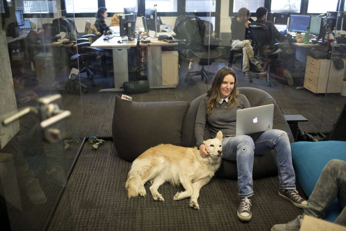 A high-tech company worker petting her dog while working on a notebook at an office in Tel Aviv, Israel, on Feb 26, 2017.