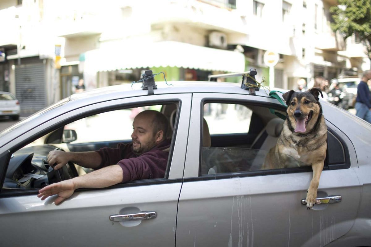 A dog looking out the window of a car in Tel Aviv, Israel, on Feb 24, 2017.