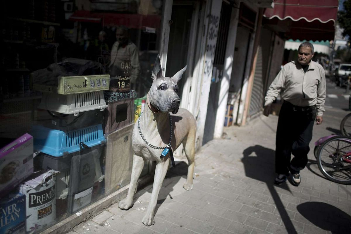 A dog sculpture is placed outside a dog shop in Tel Aviv, Israel, on Feb 21, 2017.