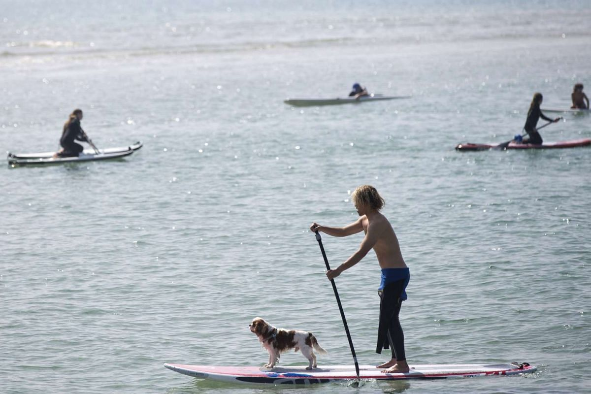 A man does standup paddle-boarding with his dog on the beach in Tel Aviv, Israel, on Feb 25, 2017.