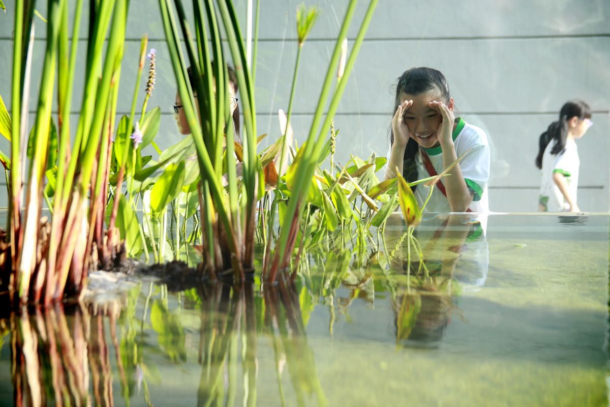 This eco-aquarium, which was launched in 2015 by Westwood Primary School, has been a place for pupils to learn more about ecology. It has eight stable freshwater animal species and 10 stable plant species. Among the animals in the eco-aquarium are th