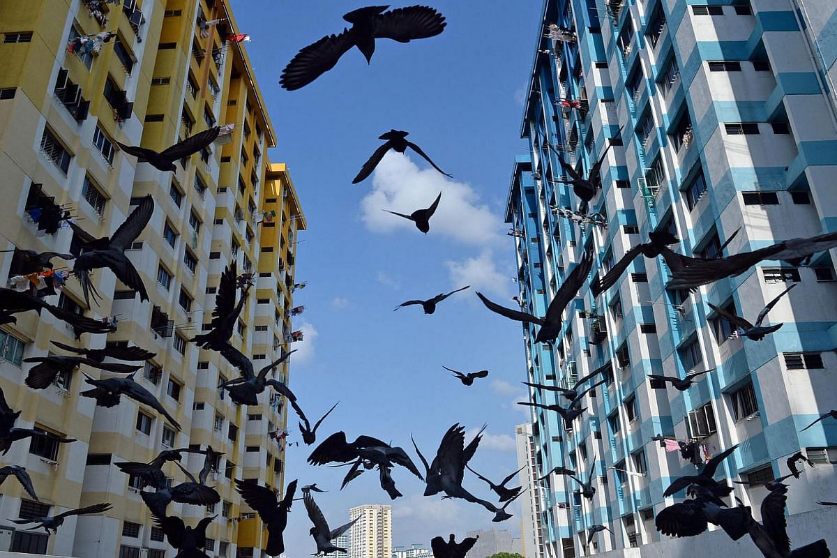 Hundreds of pigeons taking flight from the fourth level of Rochor Centre on March 25, 2016. The iconic public housing estate was to make way for the new North-South Expressway by the end of 2016.