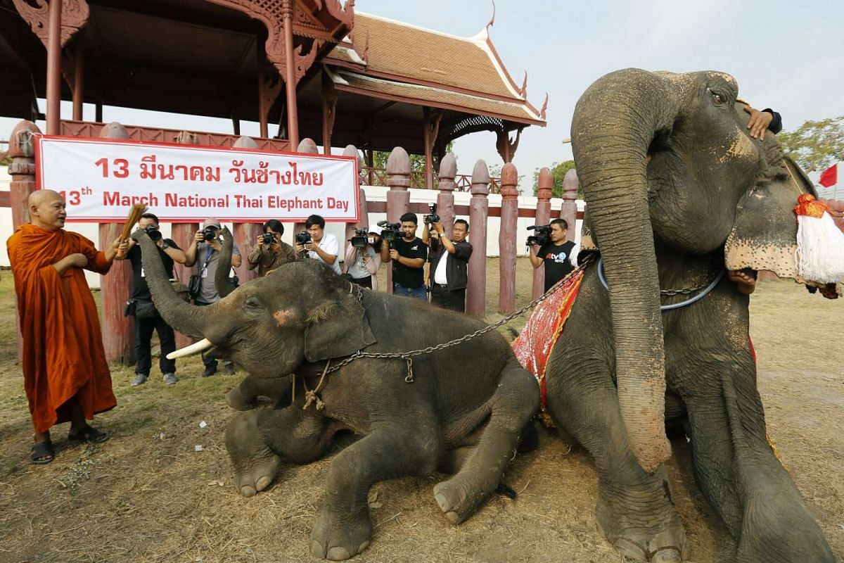 A Thai Buddhist monk (left) blesses an elephant during a religious ceremony to mark the National Elephant Day at the Elephant Kraal Pavillion in Ayutthaya province, Thailand on March 13, 2017.