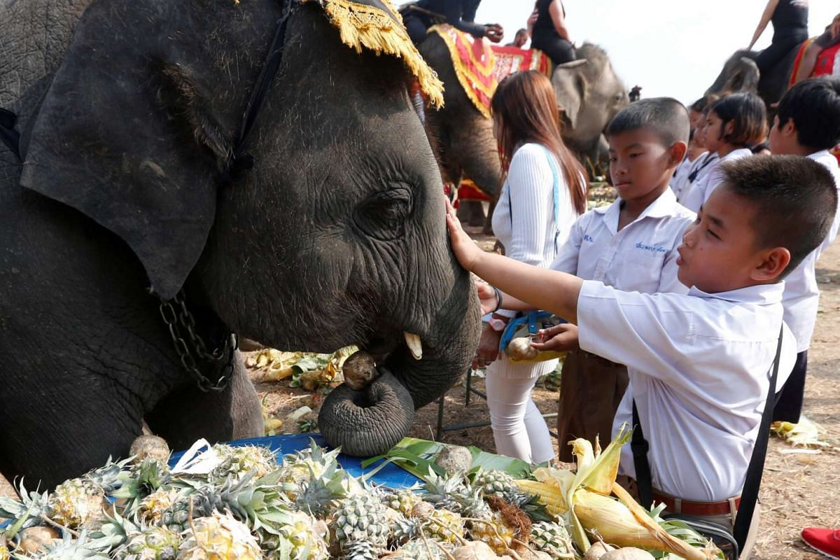 Students feed elephants during Thailand's National Elephant Day celebration on March 13, 2017.