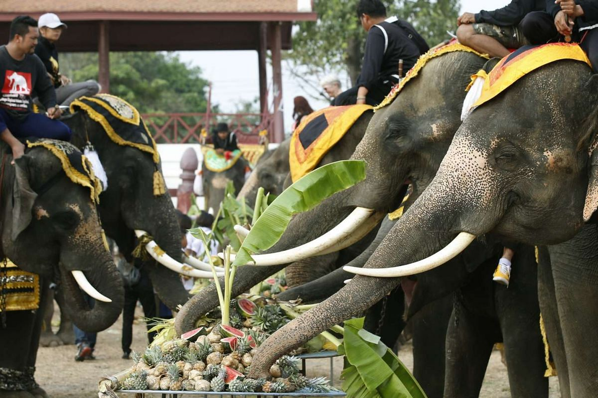 Elephants eat various kinds of fruit and vegetables during an elephant buffet to mark the National Elephant Day at the Elephant Kraal Pavillion in Ayutthaya province, Thailand on March 13, 2017.