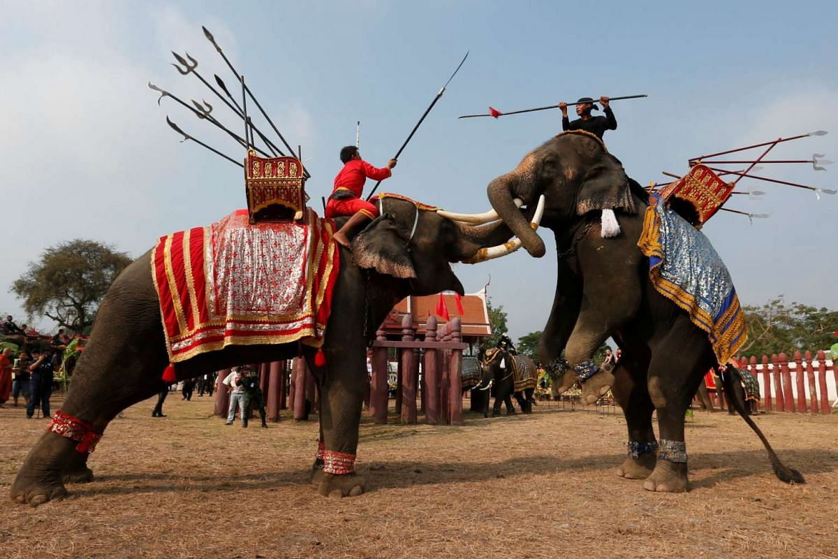 Thai mahouts take part in an elephant fighting demonstration during Thailand's National Elephant Day celebration on March 13, 2017.